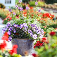Tennessee Gardening Guide | Costa Farms