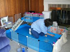 Creative guinea pig cage ideas cavy pig stuff and animal for How to clean guinea pig cages