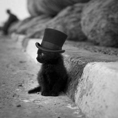 Cute. A black kitten, with black hat, near the road, black and white.