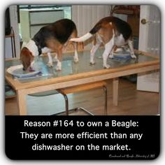 Throw out the dishwasher!!