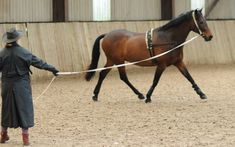 Training your horse to respond to these cues in-hand will prepare her for under saddle work making the transition from ground to saddle seamless. This training tip and more on Noble Life!