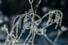 Frozen - Jäässä by Pauliina Kuikka on YouPic Nikon D300, Dandelion, Frozen, Nature, Flowers, Plants, Jewelry, Naturaleza, Jewlery