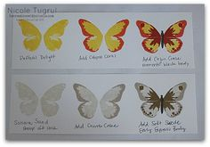 Butterfly Colors2