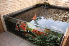 glass pond - but WAY too many fish...