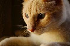 💚 Orange and White Tabby Cat - get this free picture at Avopix.com    👉 https://avopix.com/photo/45411-orange-and-white-tabby-cat    #feline #cat #kitten #animal #kitty #avopix #free #photos #public #domain