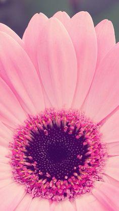 Las etiquetas más populares para esta imagen incluyen: flowers, pink y wallpaper