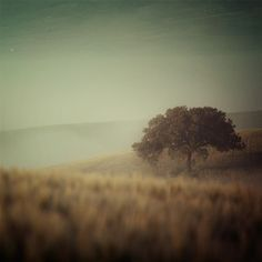 EyePoetryPhotography photo print of Tuscany.  i'm in serious danger of decorating solely with this artist's work.