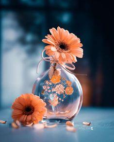 Blue Butterfly Wallpaper, Wallpaper Nature Flowers, Flowery Wallpaper, Beautiful Flowers Wallpapers, Beautiful Nature Wallpaper, Pretty Wallpapers, Colorful Wallpaper, Flowers Nature, Very Beautiful Flowers