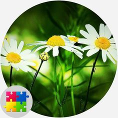 Free Jigsaw Puzzles, Plates, Tableware, Licence Plates, Dishes, Dinnerware, Griddles, Tablewares, Dish
