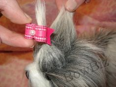 doggie hairstyles | Placing Bows - Photos : Dog Bows, Quality Dog Bows - Yorkie, Maltese ...