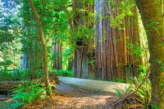 Explore Redwood National and State Parks, California (UNESCO site) - Bucket List Dream from TripBucket
