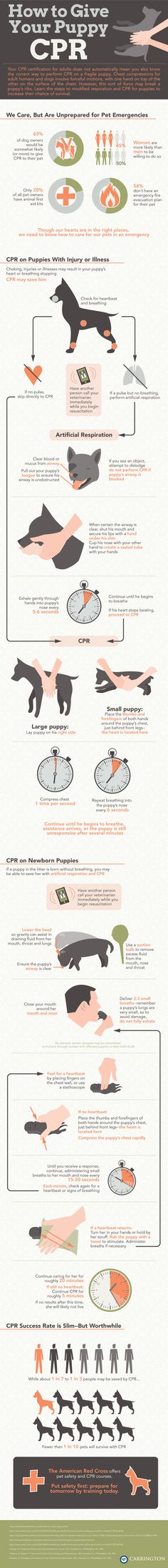 None of us wants to think about ever having to perform doggy CPR, but preparedness is the best prevention. Here's an incredible infographic on how to perform CPR on your dog - you might want to print this out and tape it to...every room in your house. Consult your vet and remember – practice (on a soft toy) will get you ready for real life situations.