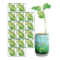 Children's Grow Your Message Bean - Toy Plant Kit - Be Mine -- This is an Amazon Affiliate link. Be sure to check out this awesome product.