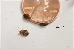 #Bedbugs made her a pretty penny...or two! But was it worth it?  https://www.washingtonpost.com/local/crime/jury-in-prince-georges-county-awards-woman-100000-in-bedbug-case/2015/09/18/25b83036-5e26-11e5-8e9e-dce8a2a2a679_story.html