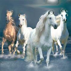 Horses . . .                                                                                                                                                                                 More