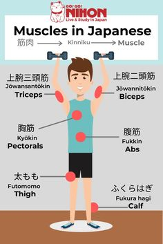 Muscles in Japanese. Japanese for beginners. Japanese for beginners Learn Japanese Beginner, Learn Japanese Words, Japanese Phrases, Study Japanese, Japanese Culture, Learning Japanese, Japanese Language School, Japanese Language Lessons, Japanese School