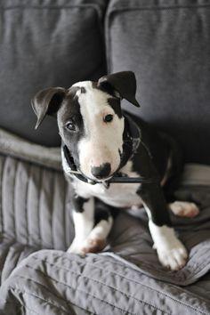cute puppy by sparklepuf