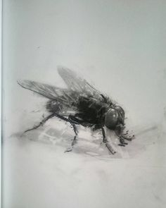 Image result for house fly diagram inspiration question mark mydrawing drawings charcoal graphite pencilsketch artsdaily artshelp artsgallery ccuart Image collections