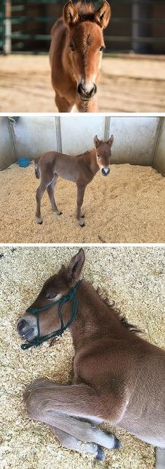 This wild baby horse was abandoned in a field, but now he's safe a rescue where he receives round-the-clock feeding and care.
