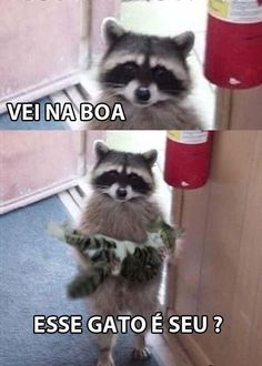 Memes brasileiros cachorro 41 ideas for 2019 100 Memes, Best Memes, Cute Kawaii Animals, Funny Animals, Funny Images, Funny Pictures, Funny Wallpapers, Animal Memes, Tumblr Funny