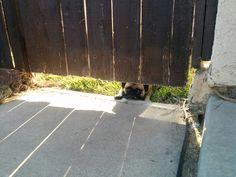 Peeping Pug!