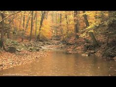 Relaxing harp music in a 3 hours long playlist of music composed by Peder B. Beautiful music featuring only harp and soft ocean waves that can be us. Relaxing Harp Music, Relaxing Gif, Sound Of Rain, Rain Sounds, Autumn Rain, Autumn Scenes, Nature Gif, Music Mood, Music Channel