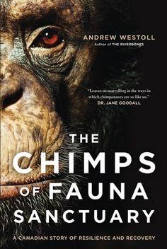 Chimps of Fauna Sanctuary