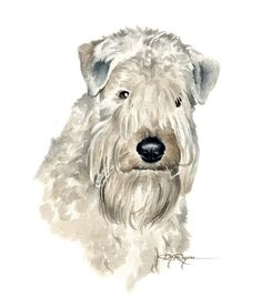 SOFT COATED WHEATON TERRIER Dog Watercolor by k9artgallery on Etsy