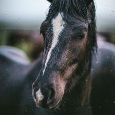 Eva Kosmas Flores (Photographer): Horse