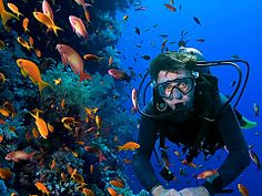 Scuba Diving and Courses. Plettenberg Bay Adventures | Thing to do in Plettenberg Bay - Dirty Boots