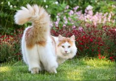 fluffy tail-this looks so much like my merlin