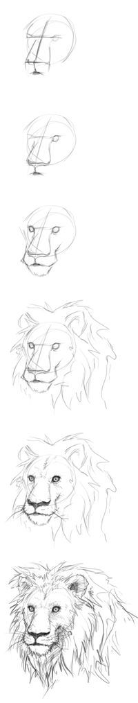 How to draw lion's head