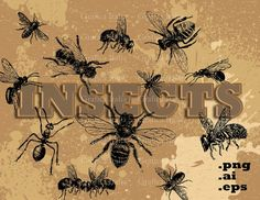 INSECTS VECTOR Clip Art Set Bee Ant Bugs Digital Clipart .ai .eps .png Instant Download Graphic Design Elements Scrapbooking DIY Crafts