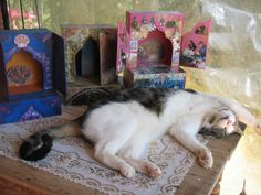 """In our shrine studio....some """"people"""" can just have a siesta whilst others have to work."""