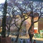 South African photo safari; read the story at Cruisin Susan Cruise Blog!
