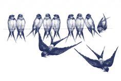 Vintage Bird Image Swallows on Line (@Matty Chuah Graphics Fairy)