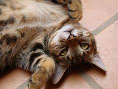 Como calcular la edad de un gato. #Salamanca #Mascotas