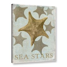 "Beachcrest Home Sea Star III Graphic Art on Wrapped Canvas Size: 32"" H x 24"" W x 2"" D"