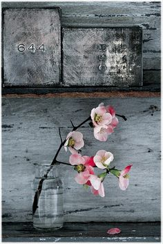 hard grey and Soft pink, great wabi sabi Deco Floral, Arte Floral, Wabi Sabi, Ikebana, Pretty In Pink, Beautiful Flowers, Simple Flowers, Pink Flowers, Jolie Photo