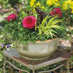 A – Coral bells Heuchera 'Dark Secret'    B – Persian buttercup Ranunculus hybrid    C – Hakonechloa Hakonechloa macra 'Aureola'    D – Sweet woodruff Galium odoratum