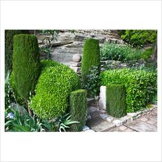 Stone stairs flanked by topiary - La Louve garden, Provence, France