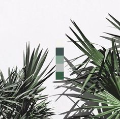 Pantone have released their 2017 colour trend predictions: 2017 will be the year of Kale.