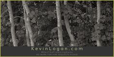 """Quiet Trees - Orient, New York"" View this photograph ⇒ http://kevinlogan.com/?p=4987 --- Archival Giclée Prints are available to purchase. 28 inch (71.2cm) wide inexpensive sample prints of my panorama photographs are available as well. --- If you wouldn't mind, could you share my post??? Cheers, Kevin"