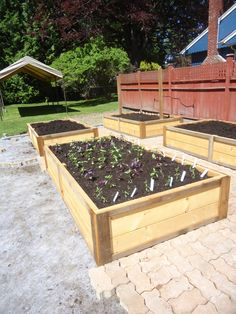 Building a kitchen garden-part two