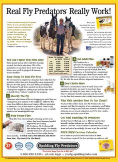 www.spalding-labs.com - Fly Predators, Get rid of flies on horses and around the barn