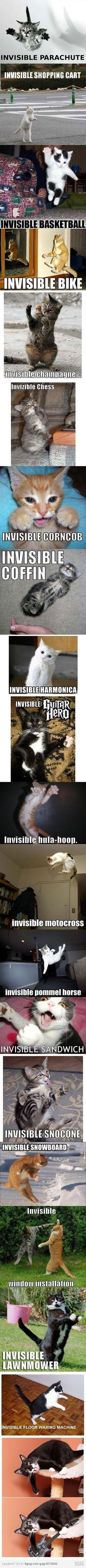 cats and invisible things lol by Schd gatos y cosas invisibles jajaja por Schd I Love Cats, Crazy Cats, Silly Cats, Funny Kitties, Tierischer Humor, Cats Humor, Funny Humor, Life Humor, Cat Jokes