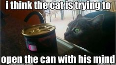 28 Funny Black Cat Memes That Prove Voids Are the Best Furry Friends Cute Cat Memes, Funny Animal Memes, Cute Funny Animals, Funny Animal Pictures, Funny Cute, Cute Cats, Funny Kitties, Funniest Animals, Cat Fun