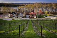 Vineyards in Hermann Missouri by Notley Hawkins Photography. Taken with a Canon EOS 5D Mark III camera with a Canon EF24-105mm f/4L IS USM lens at ƒ/8.0 with a 1/20 second exposure at ISO 100. Processed with Adobe Lightroom 5.7 and DXO OpticsPro 10.  http://www.notleyhawkins.com/