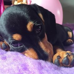 Waking up to puppy eyes on a Sunday morning 🐾🐶 .