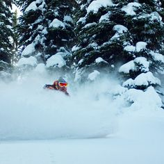 Amazing tree runs at @sws_skiing #catskiing #skiing #snowboarding David Couse #explorebc #winteriscoming #skiing #ski